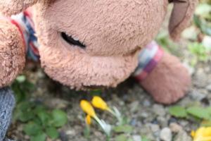 春がお顔を出したよ。