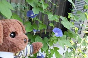 どうきれいに咲いてるでしょ。